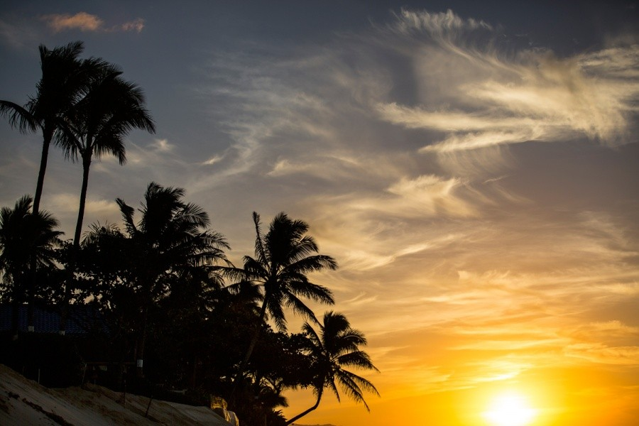 Sunsets and palm trees.   © ASP / Kirstin